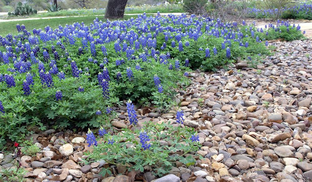 March 2012 mikki senkarik for Red rock for flower beds