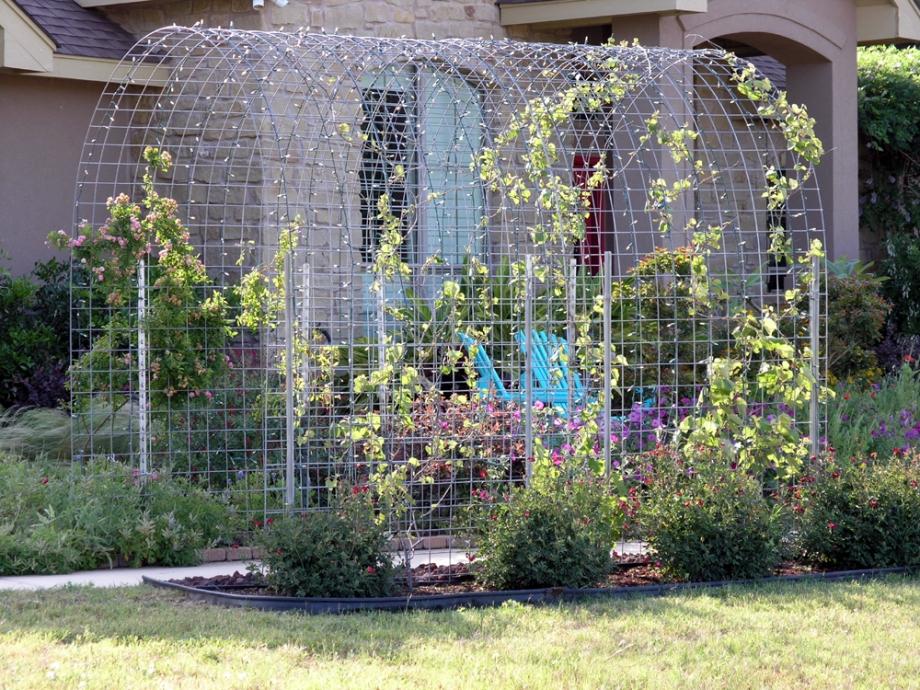 Pergola Designs Grape Vines Woodworking Plans pergola plans modern