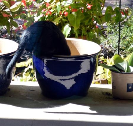 2013-1-22 Sissie in pot 2