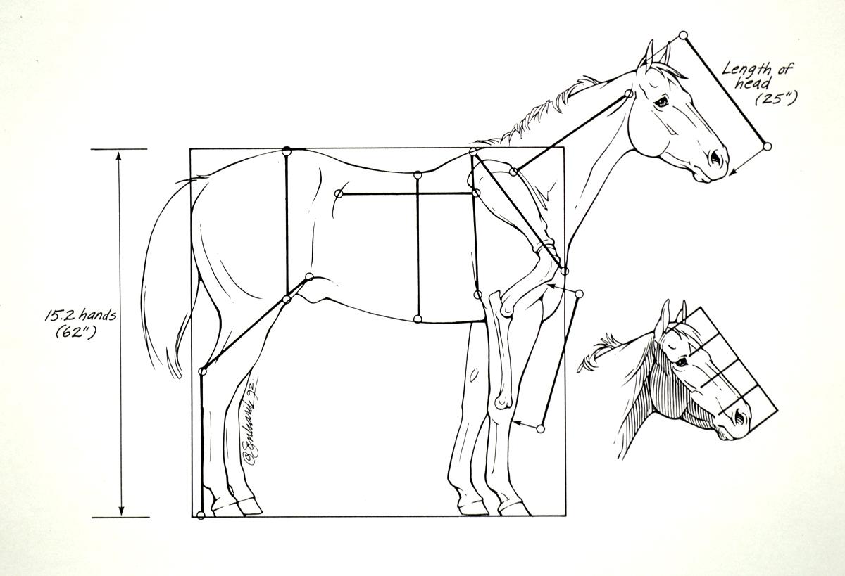 Horse Anatomy I Mikki Senkarik