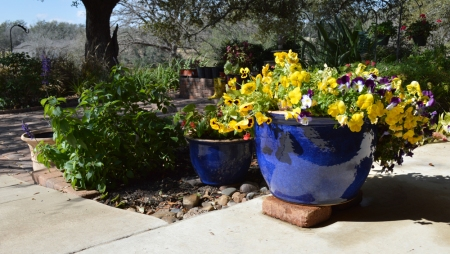 Paul Blue Pansy Container 2
