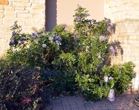 2013-3-12 Mountain Laurel front courtyard