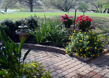 2013-3-20 fountain, geraniums and margarite daisies