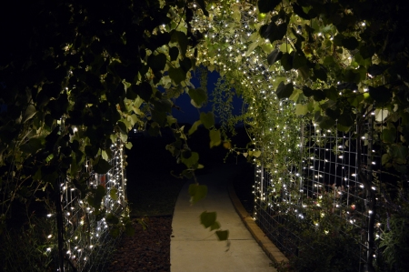 2013-9-23 Grape Arbor at night 1
