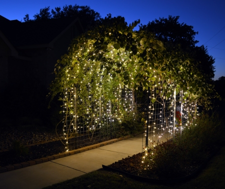 2013-9-23 Grape Arbor at night 5