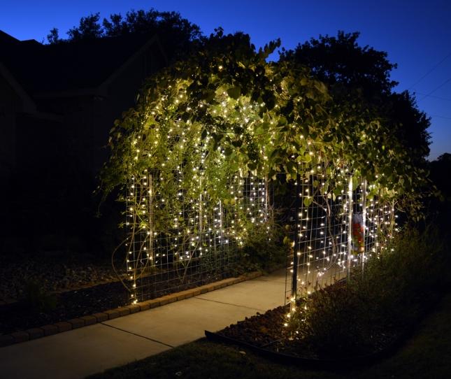 Pergola Designs For Grapes: DIY Grape Arbor Pergola Plans PDF Download Balsa Wood