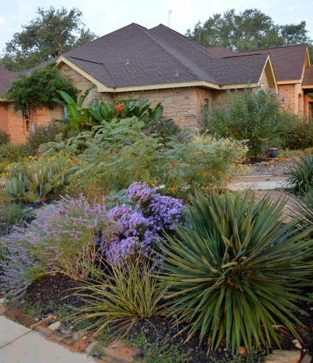 2013-10-19 Purple Asters and Russian Sage 5