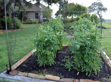 2013-10-19 Tomatos
