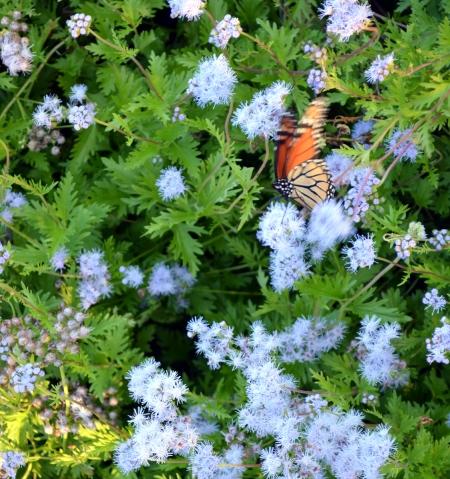 2013-10-20 butterfly in blue mist