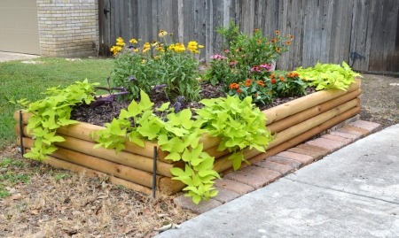 2014-6-24 raised bed 2