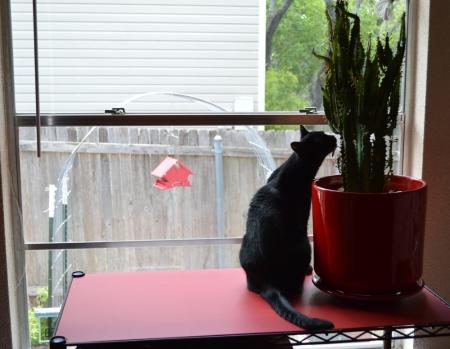 2014-6-8 Sissie at Kitchen Window