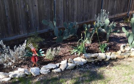 2014-12-25 Yellow Iris in Cactus garden 1