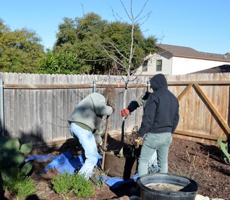 2015-2-18 Planting Rosie 1