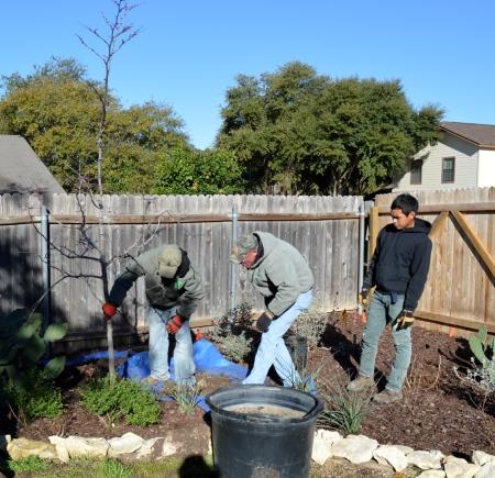 2015-2-18 Planting Rosie 3