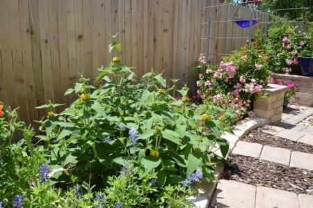 2015-4-15 Kitchen Garden 2