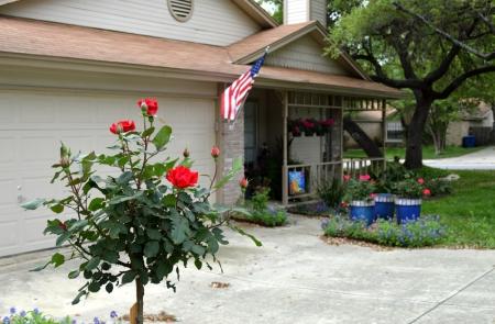 2015-4-4 Rose Tree