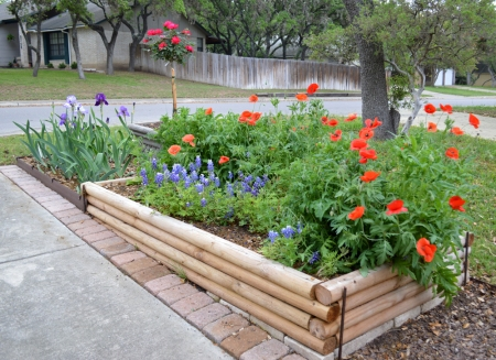 2015-4-9 Irises, Rose Tree and Poppies