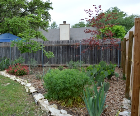 2015-4-9 Redbud garden
