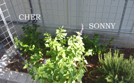 2015-4-28 Sonny and Cher labeled