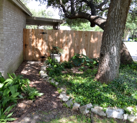2015-6-12 Fern garden north side