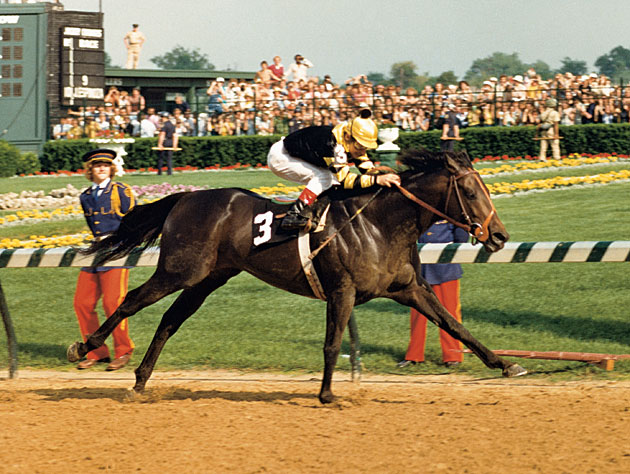 slew of people. many people think \u201cthe slew\u201d was black. actually he a deep, dark bay as you can see in the photo of him 1977 derby. slew