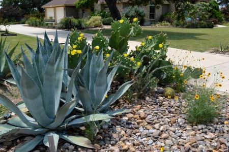 2013-6-1 Cactus garden end of drive 1