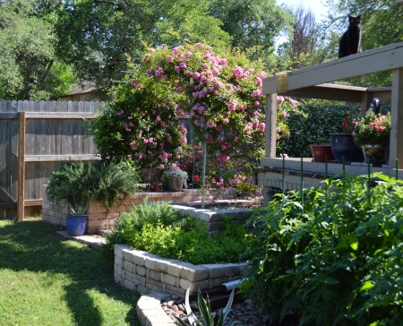 2016-4-14 Sissie and Rose Arbor