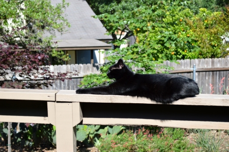 2016-4-14 Sissie on Railing