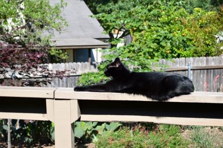 2016-4-14 Sissie on Railing
