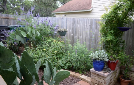 2016-5-28 Kitchen Garden Vitex