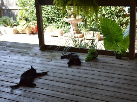 2016-9-18-two-drunk-kitties