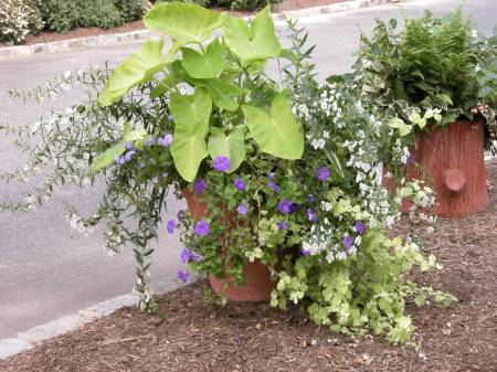 petunias-and-philodendrons