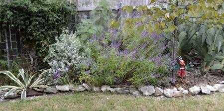 2016-10-25-salvia-lower-garden