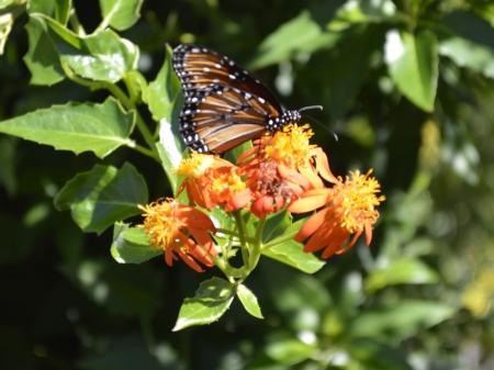 2016-11-17-butterfly-2