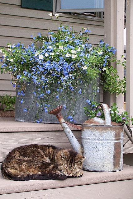 kittty-and-container-of-blue-flowers