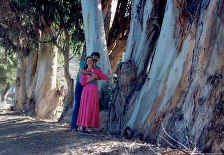 j-and-m-giant-eucalyptus-trees